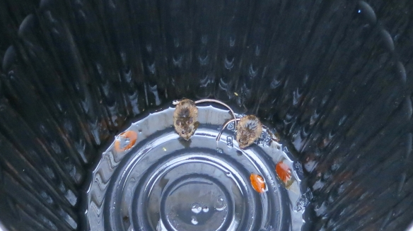 Mice in dustbin (crop)11.12