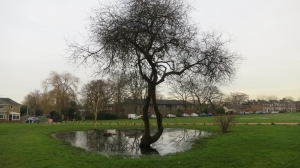 Tree in pond, Ringwood 11.12