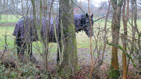 Horse sheltering 12.12