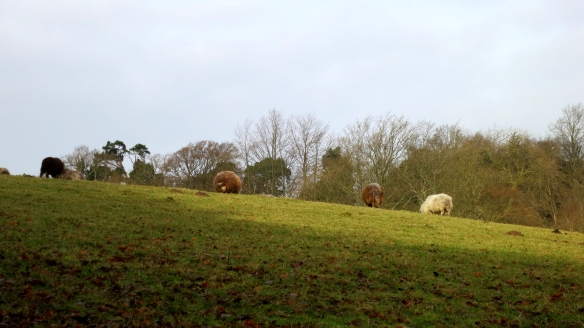 Sheep on hillside 12.12