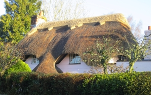 Thatched Chad 12.12