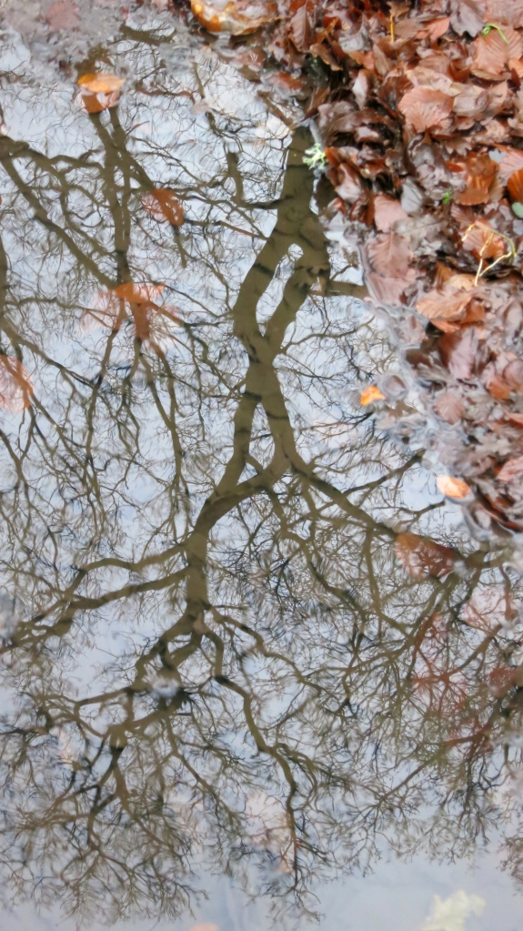 Tree reflected in pool 12.12