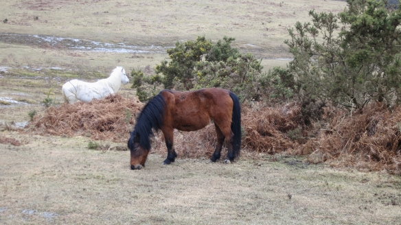 Ponies on heath 2.13