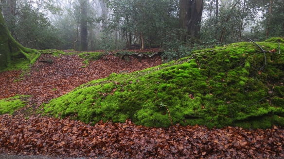 Moss and leaves 3.13