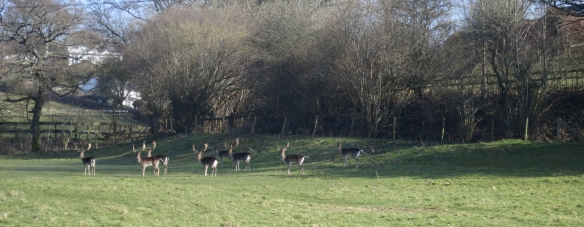 Stags 3.13
