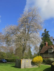 Blossom in Castle Malwood Lodge