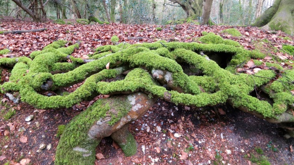 Celtic knot tree roots