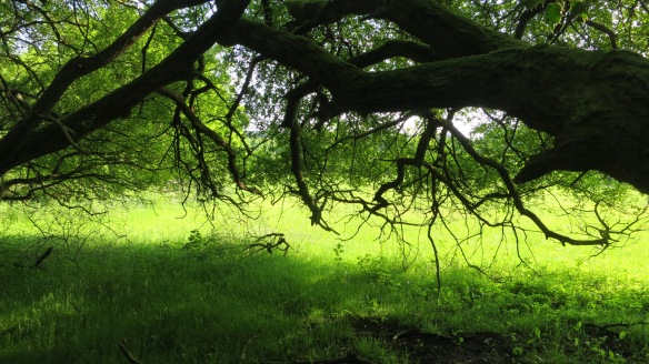 Field and branch
