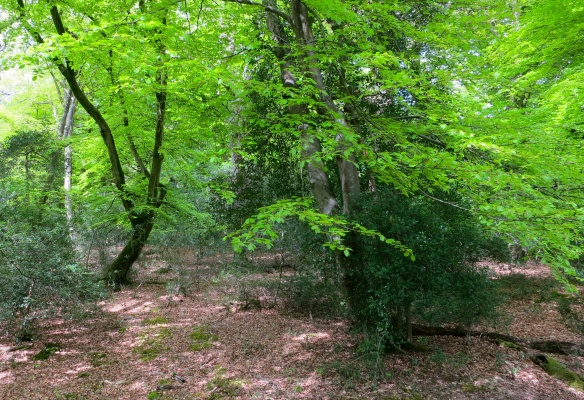 Forest Minstead