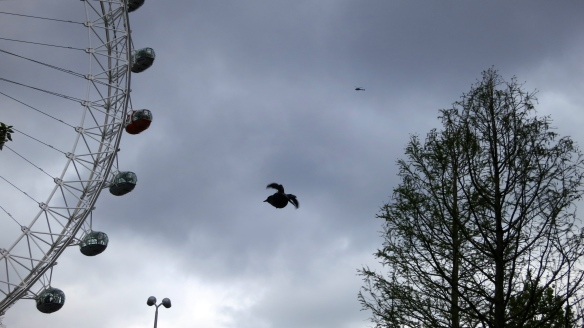 Helicopter, London Eye, Pigeon