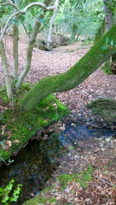 Stream and woodland
