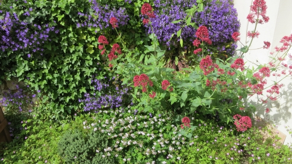 Valerian, geraniums and blue flowers