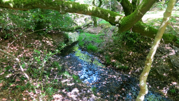 Dappled stream