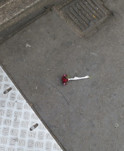 Discarded carnation