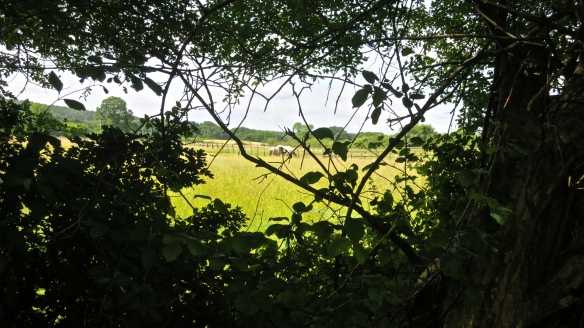 Horses through gap in hedge
