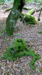 Moss-covered stump