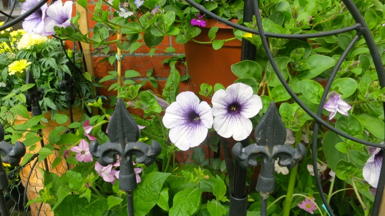 Petunias and others