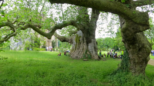 Plane tree school trip, Mottisfont