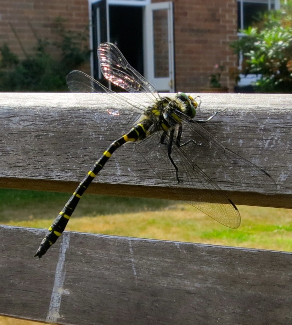Dragonfly 3