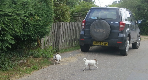 Dogs in road