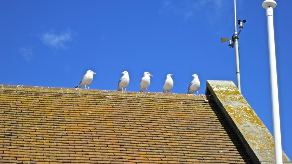 Gulls on rooftop