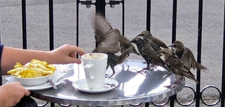Starlings and chips 2