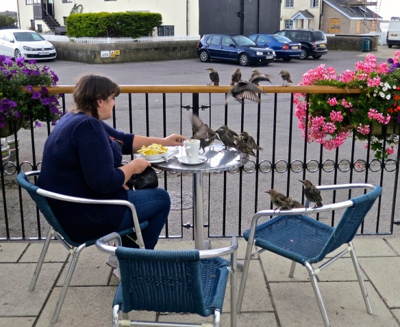Starlings and chips