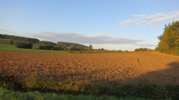 Field at dawn