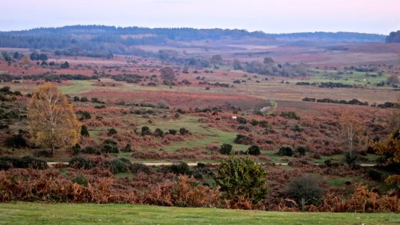 Heathland from Abbots Well car park