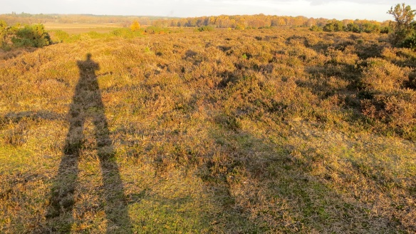 Heathland shadow