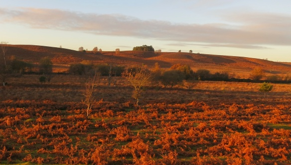 Ibsley Common at sunset