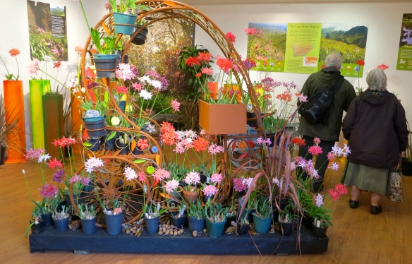 Nerines exhibition