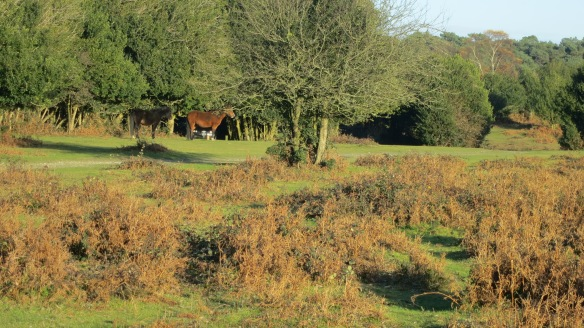 Pony bookends in bracken