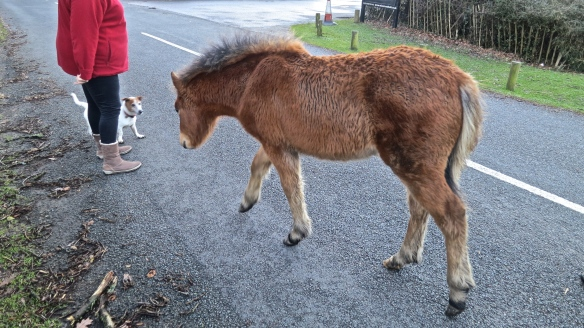 Foal and Scooby