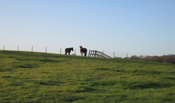 Ponies and fence on horizon