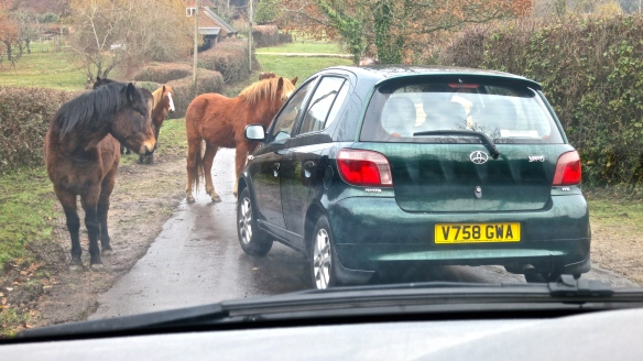 Ponies on Seamans Lane ignoring Jackie