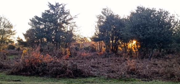 Setting sun on bracken