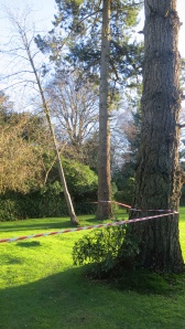 Tree taped off
