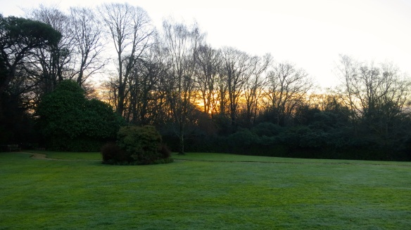 Dawn across the lawn