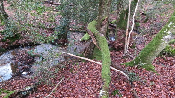 Malwood stream (1)