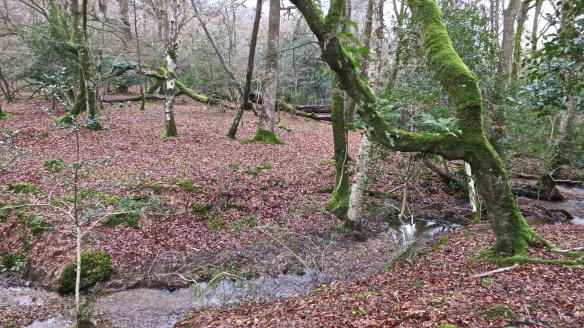 Malwood stream (2)