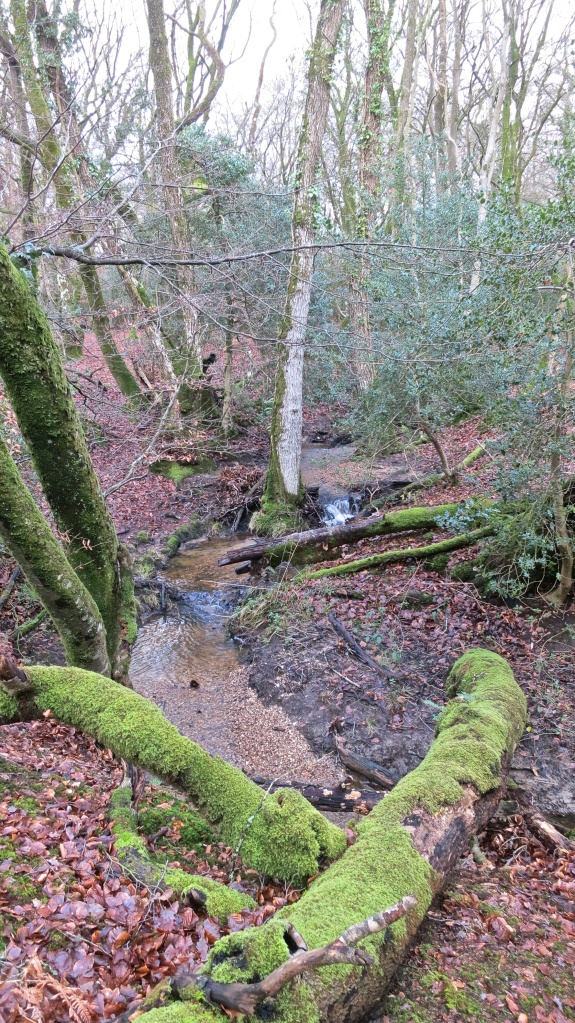Malwood stream (3)