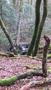 Malwood stream (4)