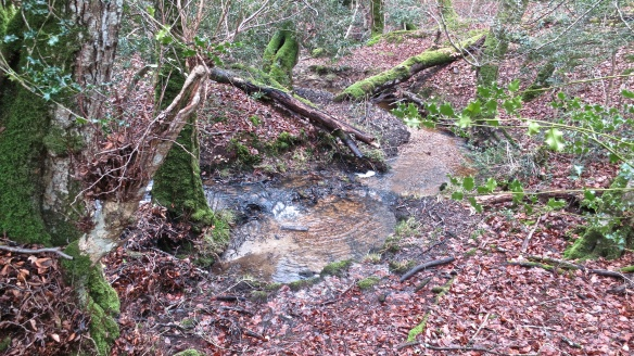 Malwood stream (5)