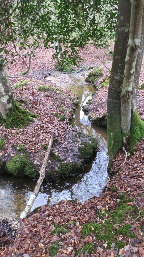 Malwood stream
