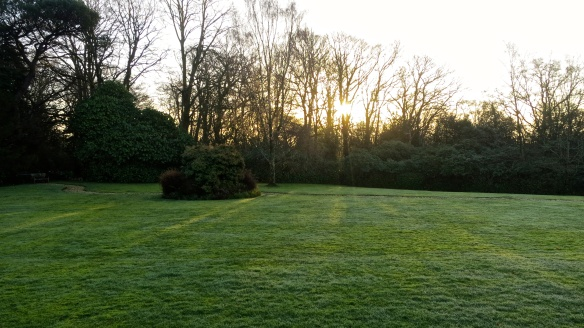 Morning across the lawn