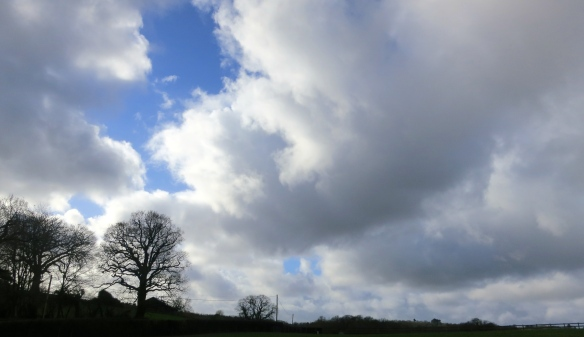 Cloudscap with trees