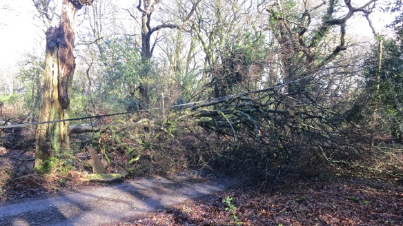 Fallen tree and cable