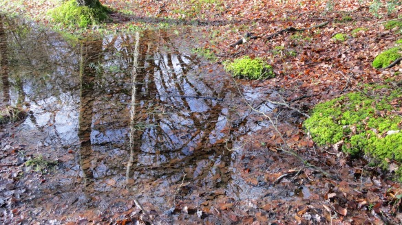 Forest pool
