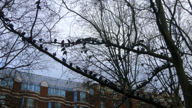 Pigeons perched